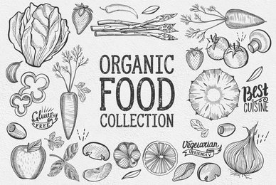 Organic Food Illustrations