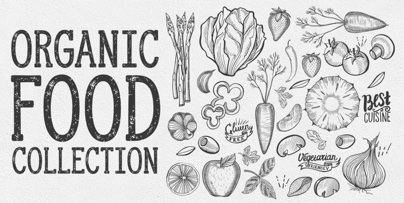Organic Food Illustrations