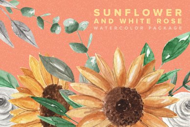 Sunflower and White Rose Watercolor Package