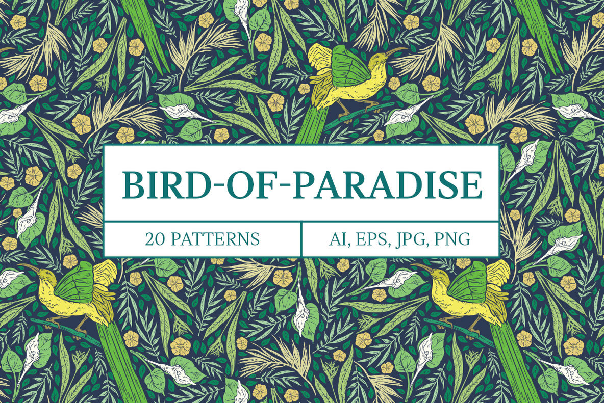 Bird of Paradise Patterns