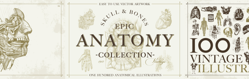 100 Vintage Anatomy Vector Illustrations