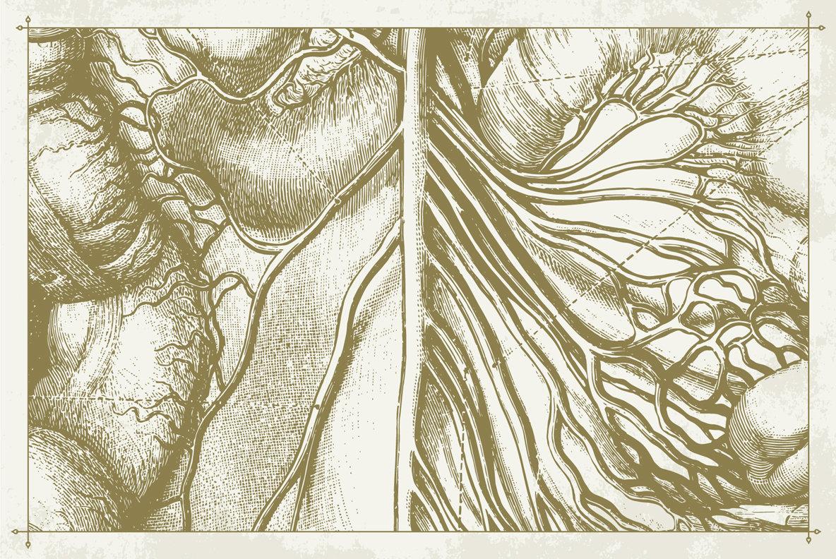 100 Vintage Anatomy Vector Illustrations