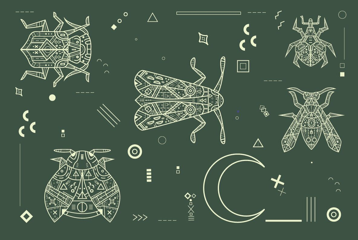 Insect Universe