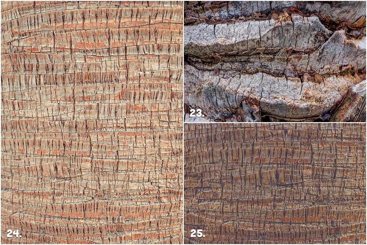 29 Palm Bark Textures