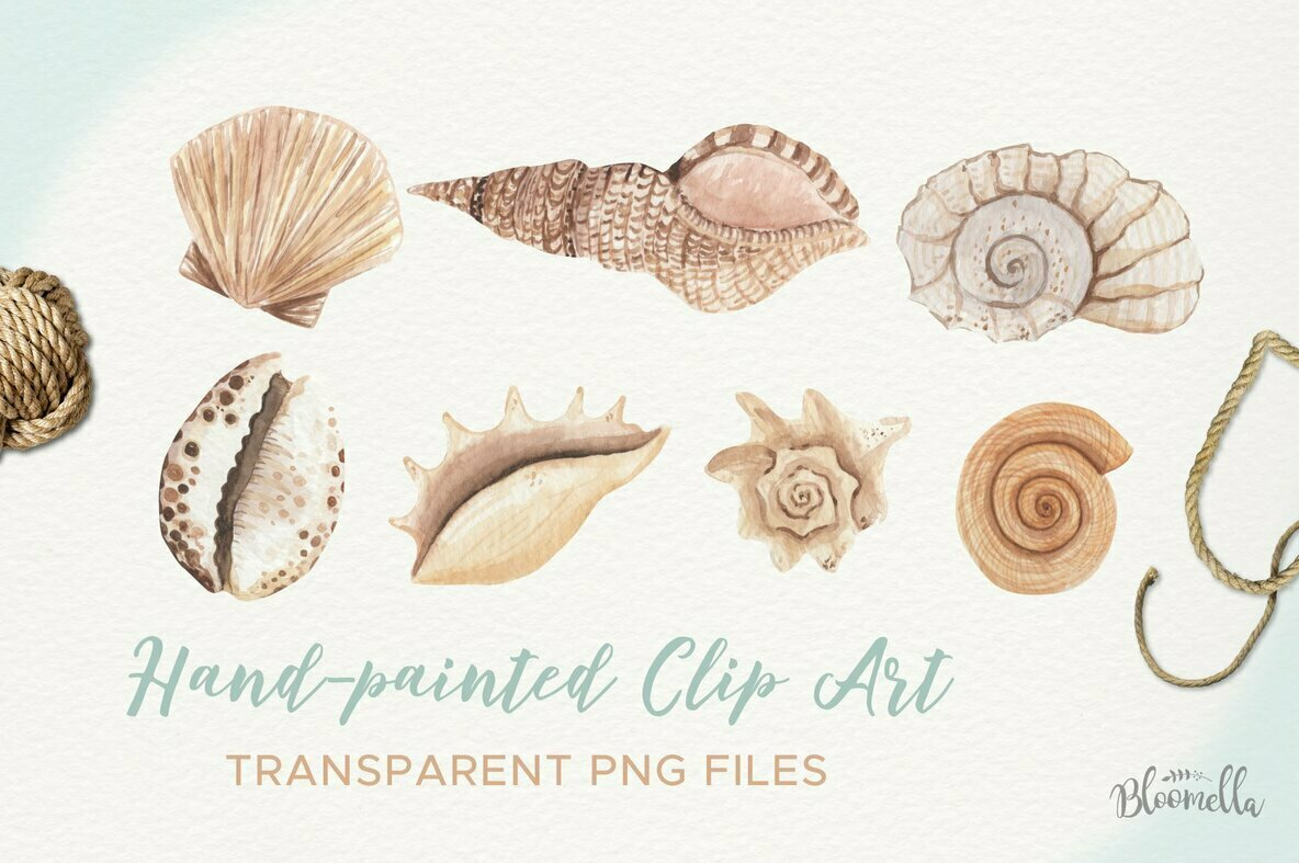 Sea Shells Elements Watercolor Package