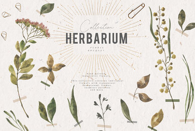 Herbarium Watercolor Collection