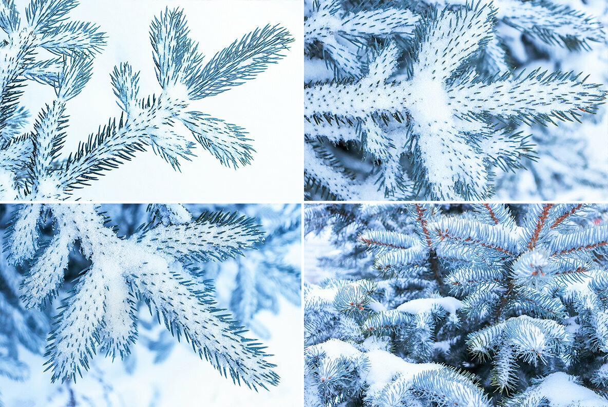 13 Blue Tree Background Textures
