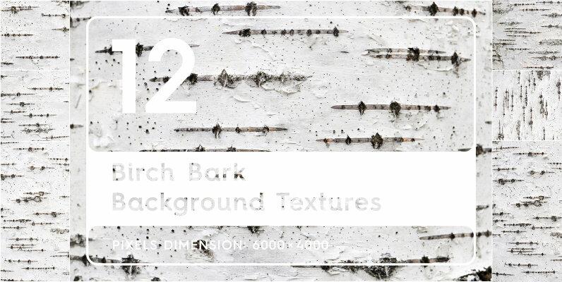 12 Birch Bark Background Textures