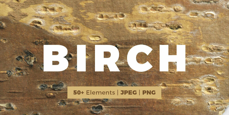 Birch Barks and Twigs Texture Kit