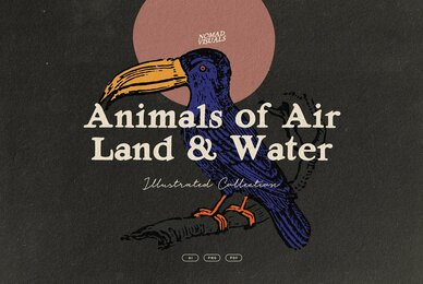 Animals of Air  Land  Water