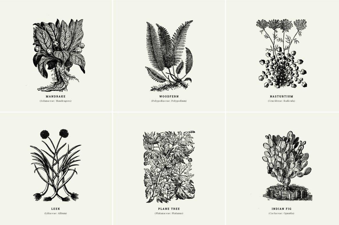 Botanical Illustrations