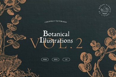 Botanical Illustrations Vol  2