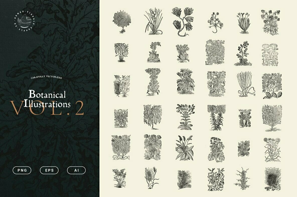 Botanical Illustrations Vol  2