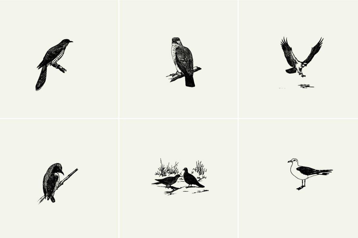 Birds Illustrations