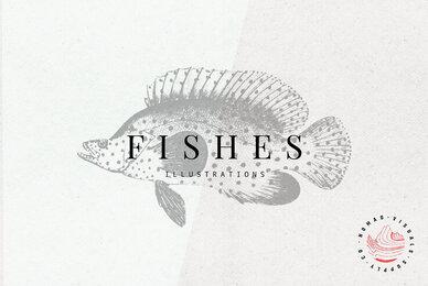 Fishes Illustrations
