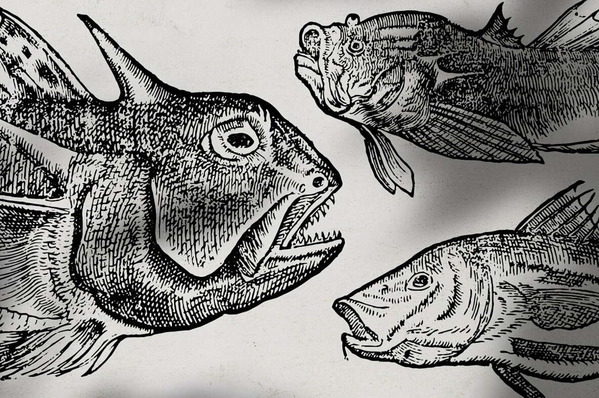 Fishes Vol 1