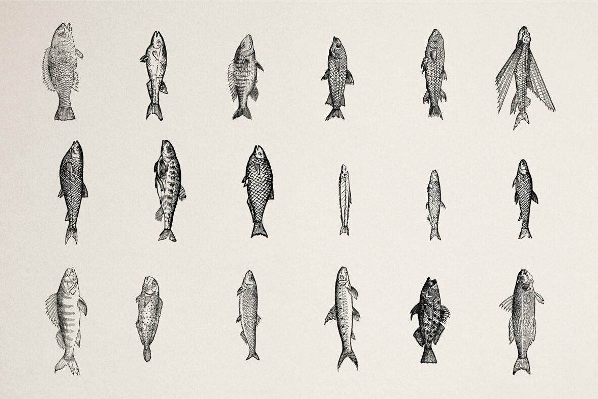 Fishes Vol 2
