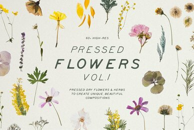Pressed Dry Flowers  Herbs Vol 1