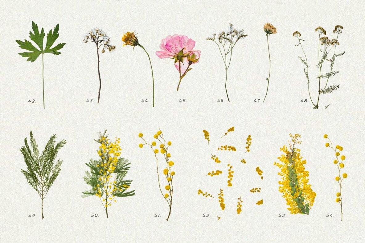 Pressed Dry Flowers   Herbs Vol 1