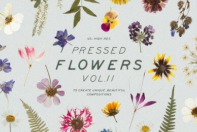 Pressed Dry Flowers  Herbs Vol 2