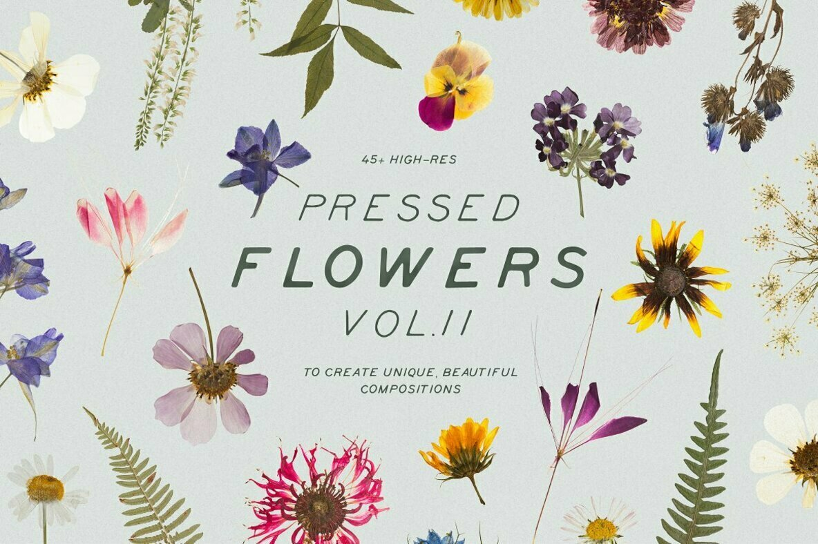 Pressed Dry Flowers   Herbs Vol 2