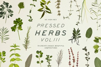 Pressed Dry Herbs Vol 3