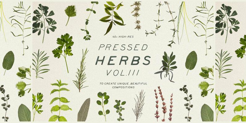Pressed Dry Herbs Vol 3