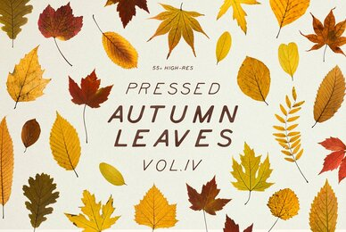 Pressed Autumn Leaves Vol 4