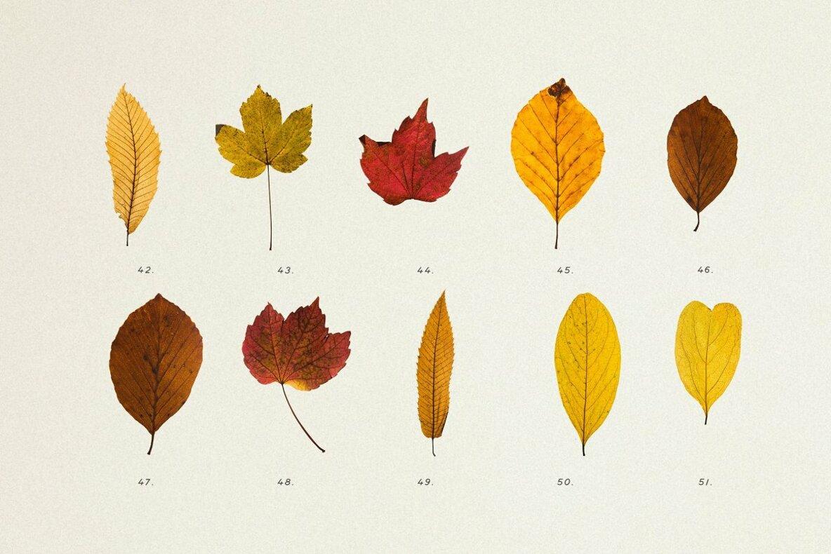 Pressed Autumn Leaves Vol 4