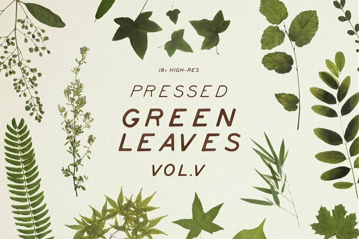 Pressed Green Leaves Vol 5