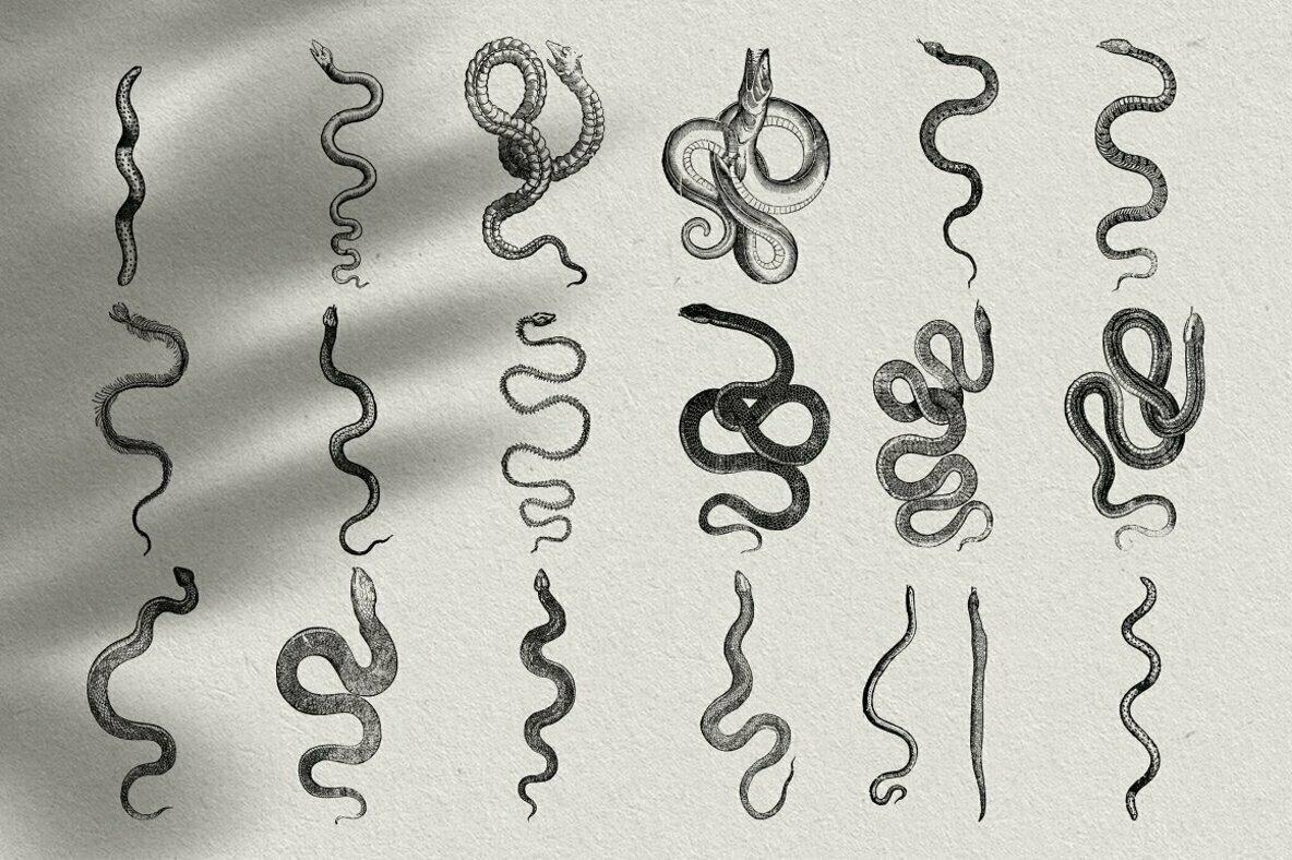 Snakes   Dragons