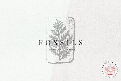 Fossils Illustrations