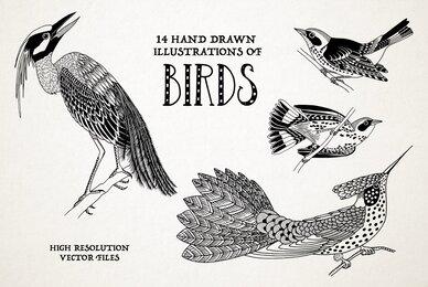 Hand Drawn Illustrations of Birds