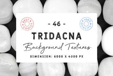 46 Tridacna Background Textures