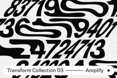 Transform Collection 03   Amplify