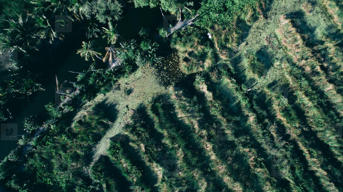 Drone Jungle Photo
