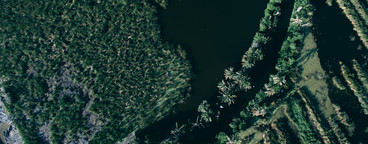 Drone Jungle Photo 2