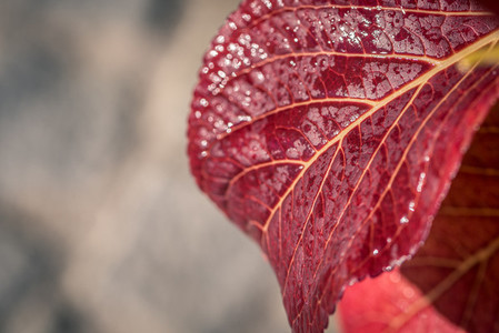 Red leaf after rain