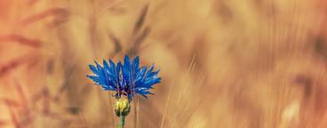Bluw flower