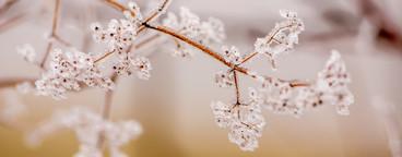 Winter flower   ice