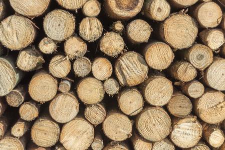 Wooden staple