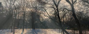 Winter in vienna city