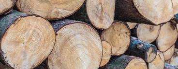 Wood staple