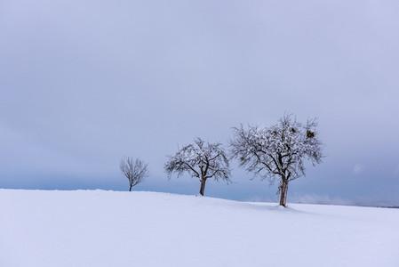 Three trees winter