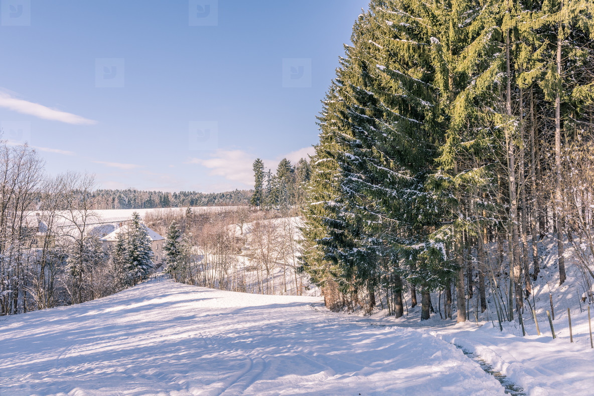 Winter walk   forest