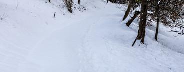 Winter way   Landscape