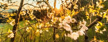 Summer blossom