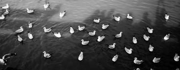 Bird Black White