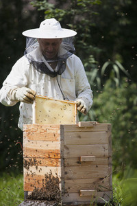 Beekeeping 01