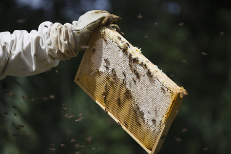 Beekeeping 03